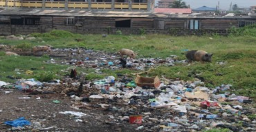 Clean up and sanitation